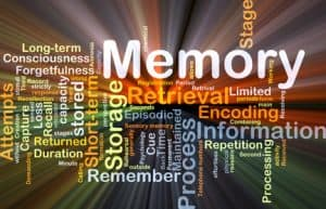 Short Term Memory Loss: Let's Take a Look Now at How Your Brain Works in Terms of Memory